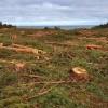Wycięli 10 tys. drzew na miejscu Przekopu Mierzei Wiślanej. Zobacz wideo i zdjęcia