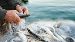 Wspólna Polityka Rybołówstwa: mamy plan dla Bałtyku, z którego możemy być dumni
