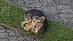 Sztutowo : Znaleziono psa - 16.08.2017
