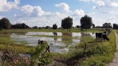 Nowy Dwór Gd.: Krajobraz po intensywnych deszczach, Państwowa Straż Pożarna raportuje - 19.09.2017
