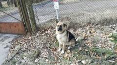 Zagubiony pies w Sztutowie