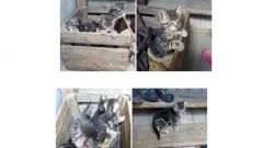 Szukamy domu dla bezdomnych kociaków z Gminy Ostaszewo