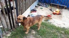 Znaleziono psa w Nowej Kościelnicy pomóż znaleźć właściciela.