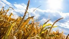 Pomoc dla rolników w związku z suszą. Informacja Agencji Restrukturyzacji i Modernizacji Rolnictwa.