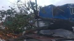 Wichura powaliła drzewo w centrum Malborka. Pień był pozbawiony korzeni?