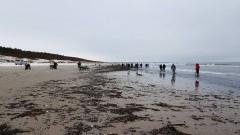 Bursztynowa gorączka na plaży w Jantarze. Zobacz na żywo