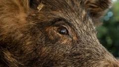 Informacja o polowaniu zbiorowym na terenie lasu w Stegnie i Krynicy Morskiej