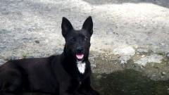 """Konsultacje ws. projektu """"Programu opieki nad zwierzętami bezdomnymi oraz zapobiegania bezdomności zwierząt na terenie Gminy Stegna na 2019 rok"""