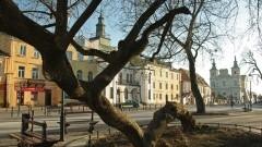 Klęczące Drzewo z Krasnegostawu walczy o europejski finał – głosujcie!