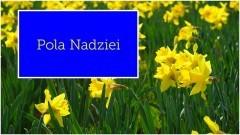 Wielka Kwesta i Żonkilowa Sztafeta, czyli Pola Nadziei na Pomorzu.