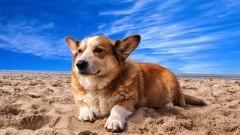 Z psem na plażę? Czemu nie! Plaża dla psów w Gminie Sztutowo.