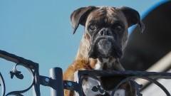 Czipowanie psów w Nowym Stawie ma pomóc zmniejszyć liczbę bezpańskich zwierząt.