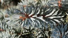 Gmina Nowy Dwór Gdański: Jesienna akcja wydawania sadzonek drzew
