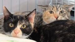 Malborski REKS apeluje do wszystkich miłośników i przyjaciół zwierzaków o dom dla uroczych kotków.