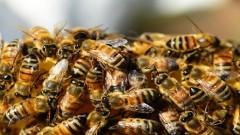 Pszczoły i zalana ulica – raport nowodworskich służb mundurowych.