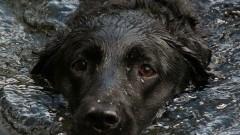 Topiący się pies i pożar w Rybinie – raport nowodworskich służb mundurowych.