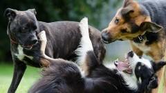 Psy (właściwie) bez nadzoru