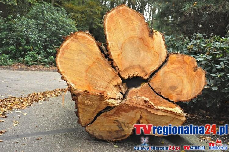 Od nowego roku wycinka drzew bez pozwolenia - 10.01.2017