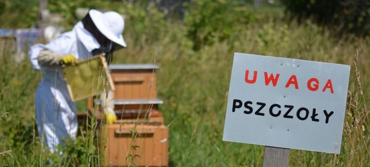 Grozi nam klęska ekologiczna. Na Żuławach niedługo nie będzie pszczół. Zobacz wideo i zdjęcia - 06.07.2017