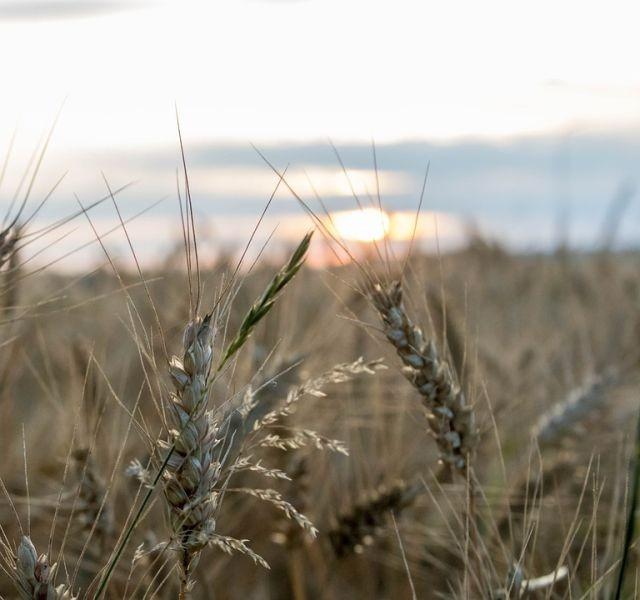 Gmina Stegna : Pomoc dla rolników - 12.09.2017