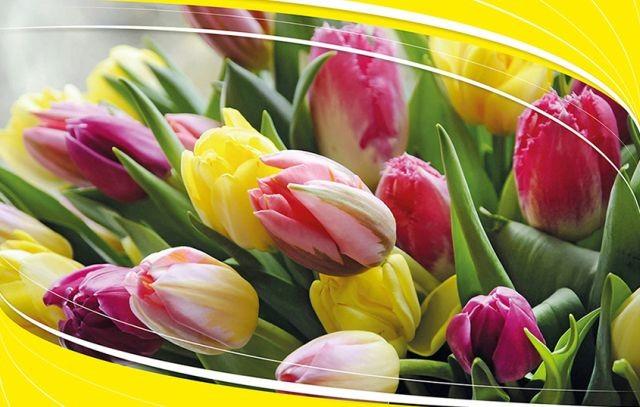 Zapraszamy na IX Wiosenne Targi Ogrodnicze w Starym Polu