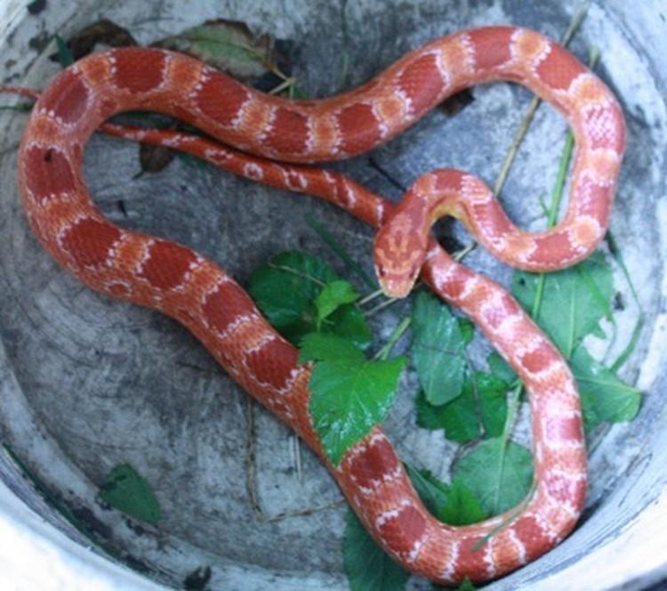 Skąd wąż pojawił się na osiedlu w Malborku? Służby szukają jego właściciela.