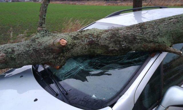 Stanisławowo: Drzewo uszkodziło auto. Niebezpieczne skutki wichury.