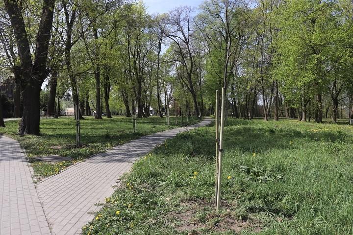 Drewnica: 40 nowych drzew w parku.