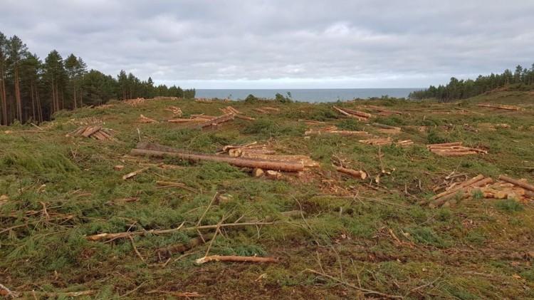 Czy terenom leśnym na Mierzei Wiślanej grozi degradacja?