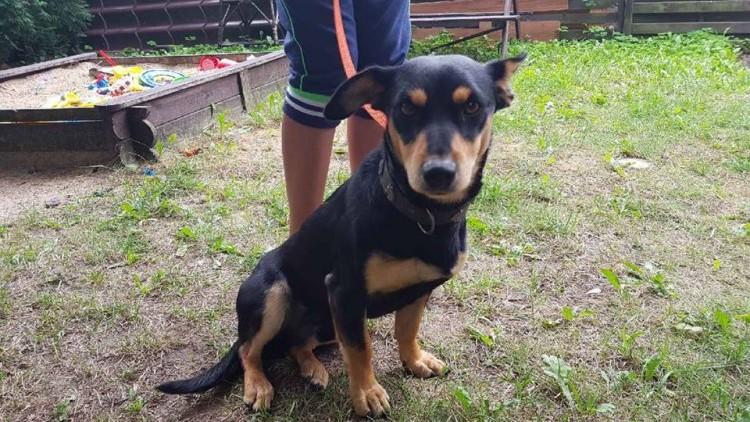 Gmina Stegna: Poszukiwany właściciel psa. Prosimy o kontakt.