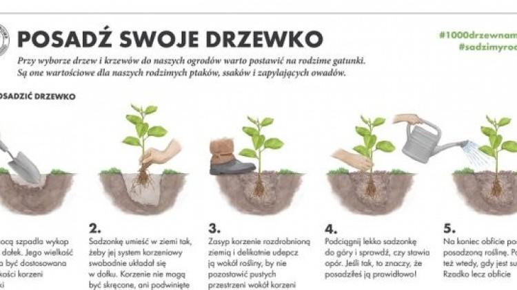 """""""sadziMY"""" ogólnopolska akcja sadzenia drzew."""