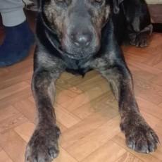 Znaleziono psa na terenie sołectwa Lasowice Wielkie Agro-Lawi. Jest to kilkuletnia suczka, rasa mieszana. Pies jest przyjazny, niegroźny oraz oswojony - 23.01.2017